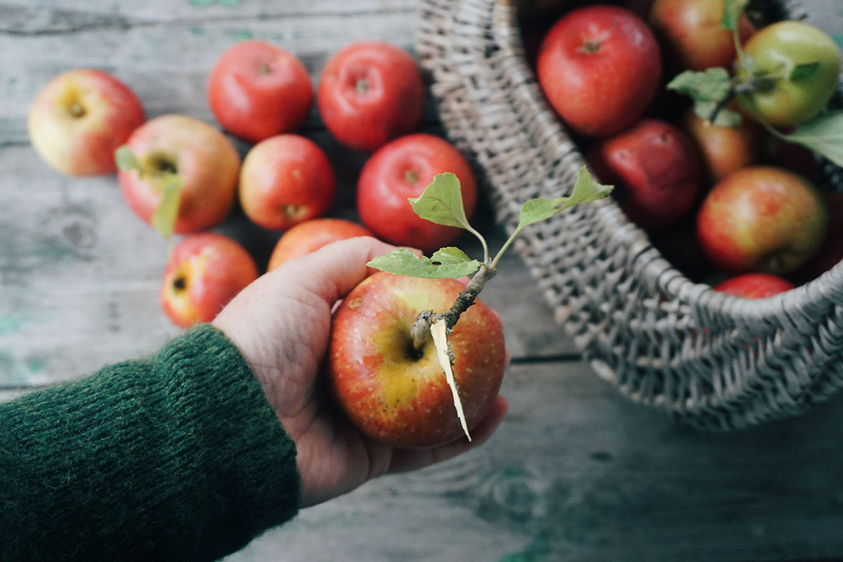 Cropped Image Of Hand Holding Apple