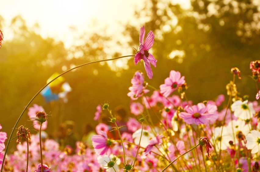 Flowers-over-warm-sunset-000041307398_Small