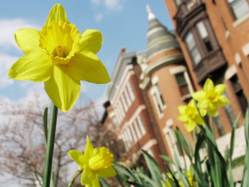 Spring Blooms in the City