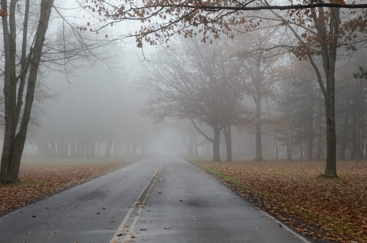 Foggy Road in Autumn with Car Headlights in Distance