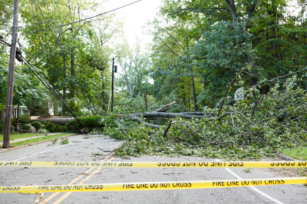 """A fallen tree across the road knocked down by Hurricane Irene. The large tree pulled down power lines and blocked the road. A bent speed limit sign can be seen. There is also """"Fire Line"""" tape across the road. There were many power outages due to damaged power lines."""