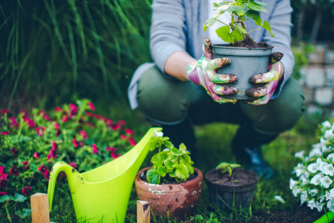 How to Create Your Own Jewish Garden (Yes, It's a Real Thing!)