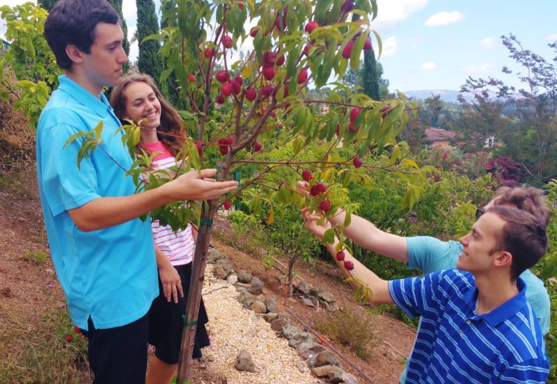 Elias Rosenthal – learning about organic fruit- plums