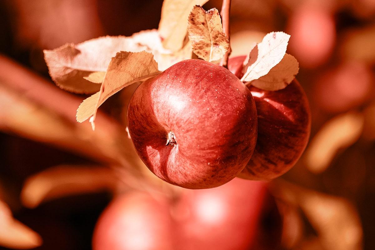 apple convert