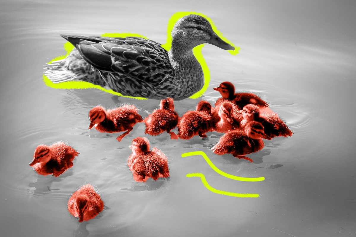 flock5